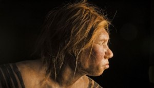 neanderthal-profile_940x541